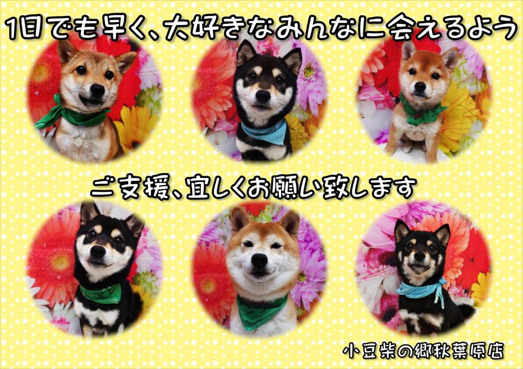 小豆柴の郷の犬たち